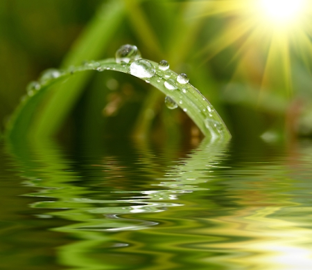 Green-grass-with-raindrops