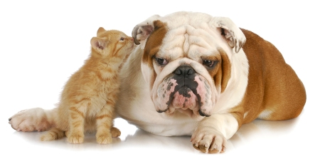 cute kitten-and-dog
