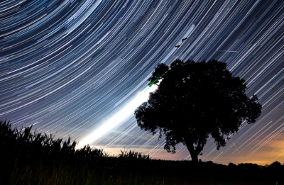 star trail tree
