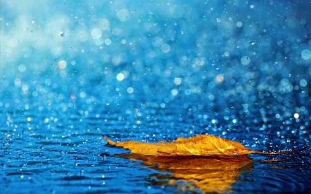 rain-and-leaf